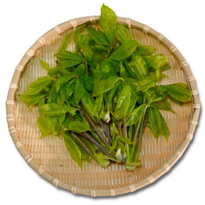 【予約】天然山菜 こしあぶら 300g(採取者・白井)