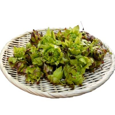 【完売】天然山菜 ふきのとう 500g(採取 笑顔の里)