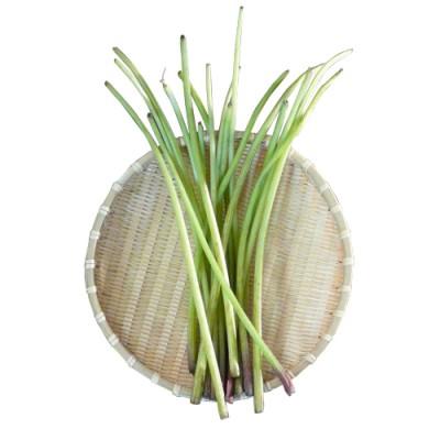 【予約】天然山菜 山ふき 1kg(採取者・笑顔の里)