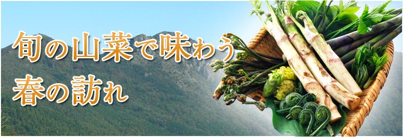 旬の山菜で味わう春の訪れ